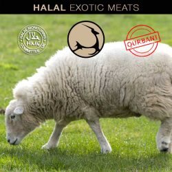 Halal Exotic Meats Qurbani Lamb Order Online Eid Adha