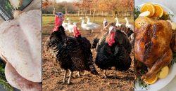 Halal Turkeys Organic Free-Range Christmas London