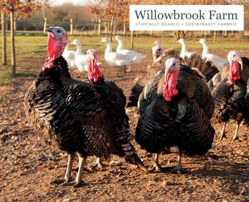 Willowbrook Farm Halal Free Range Organic Turkeys Christmas